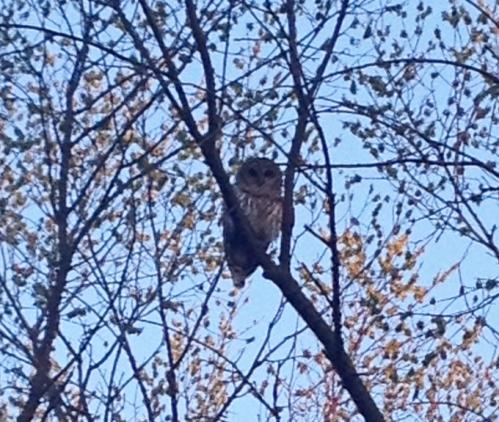 OwlMorning